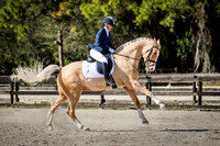 Fox Lea Dressage 2016 Shows